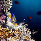 Exciting Red Sea World by hurmerinta