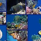 Red Sea Collage 1 by hurmerinta