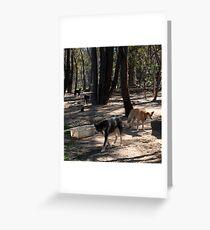 Black Dingoes Greeting Card