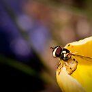 Vigilant Bee by toby snelgrove  IPA