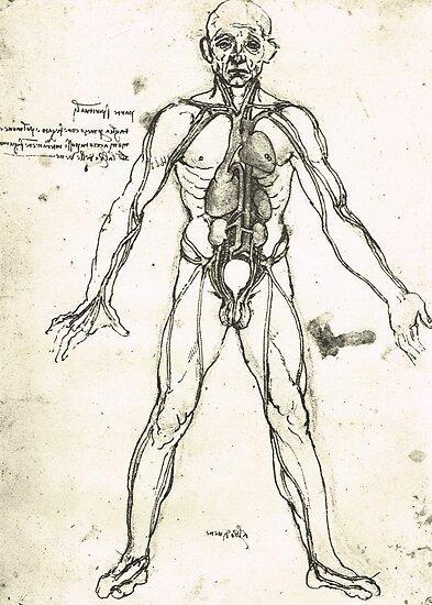 Pósters «Figura anatómica de un hombre, para mostrar el corazón, los ...