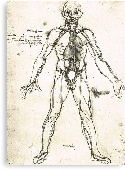Lienzos «Figura anatómica de un hombre, para mostrar el corazón, los ...