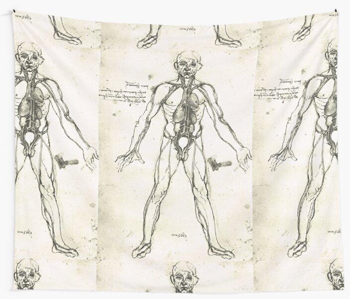 Telas decorativas «Figura anatómica de un hombre, para mostrar el ...