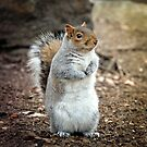 Central Park Squirrel  by Monica Carvalho (mofart_photomontages)