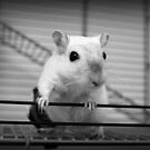 White gerbil  by Monica Carvalho (mofart_photomontages)