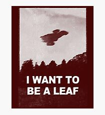 be leaf Photographic Print