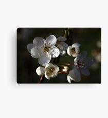 A New Season Coming into Bloom Canvas Print