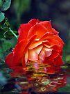 Orange Beauty  by Elaine Manley