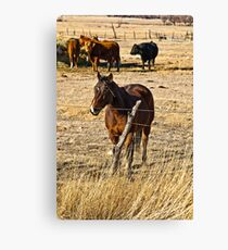 Barbedwire Beauty Canvas Print