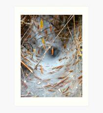 funnel-web i Art Print