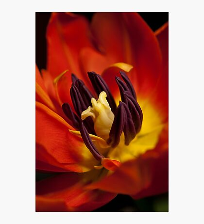 I'm on Fire! Photographic Print