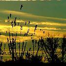 Yellow dream by Cricket Jones
