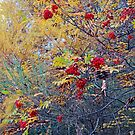 Autumn Delight by Harry Oldmeadow