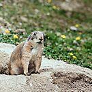 Prairie Dog by Buckwhite