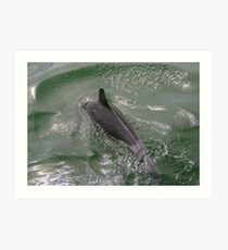 Dolphin in the Roiling Sea Art Print