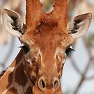 Giraffe II by Steve Bulford