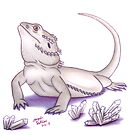 Bearded Dragon - White by AngelaDeRiso
