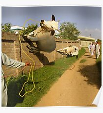 In Pothwar, even the Cows are Space Age Poster