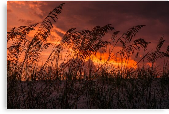 Sunset through the sea oats by Zina Stromberg