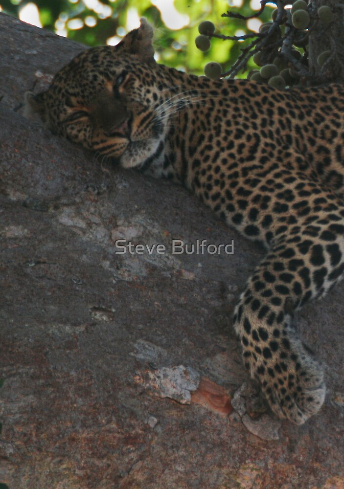 Bella The Leopard  by Steve Bulford