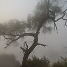 Morning Fog at Bharatpur 02 by Werner Padarin