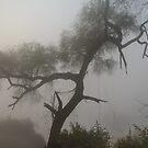 Morning Fog at Bharatpur 02 by Werner Padarin
