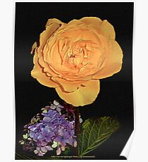 JUST PHOTOS ~ FLORAL ~ D1G1TAL-M00DZ ~ Yellow Rose and Hydrangea Florets by tasmanianartist Poster