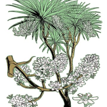 Palm Tree Fauna Plant Nature Botanical Illustration by encyclo-art