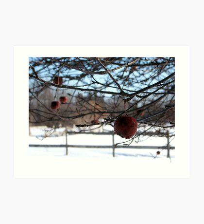 Cold Fermentation becomes Apple Ice Wine Art Print