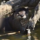 Wild River Otter in Texas by Kate Farkas