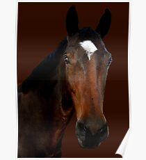 Mr Horse Poster