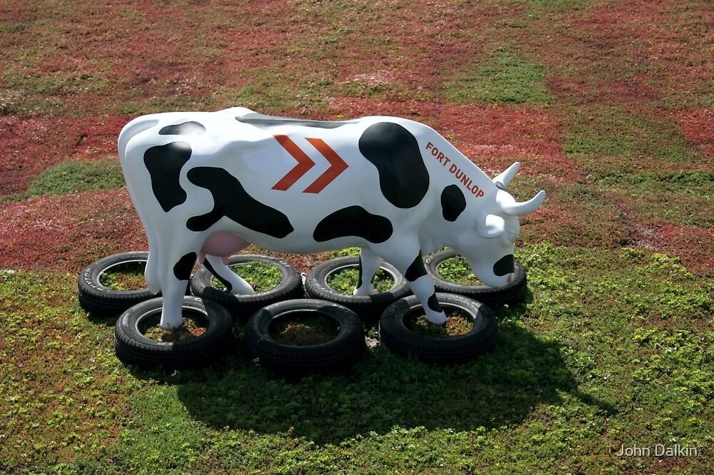 Cow Training by John Dalkin