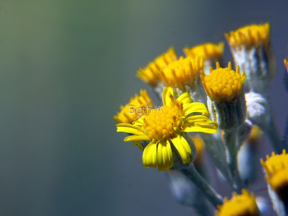 Yellow Delight by Beth A