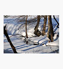 Snowbound Photographic Print