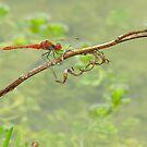 Red Dragonfly by Biggzie