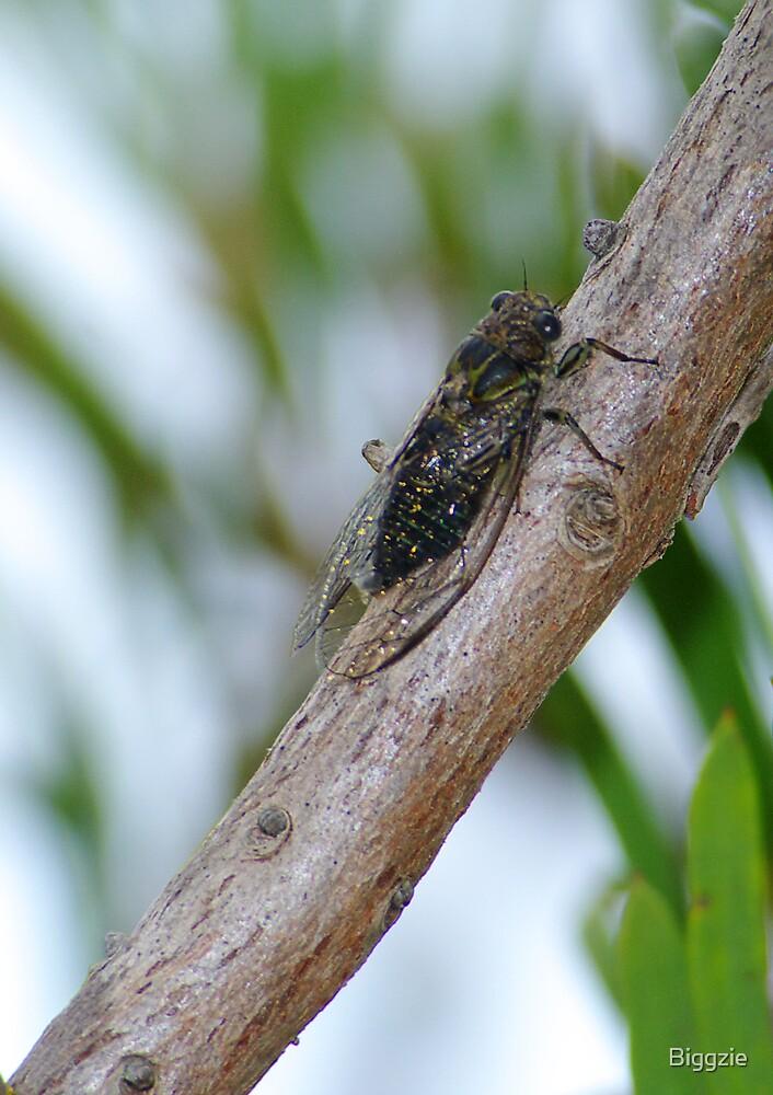 Sprinkler in the Trees by Biggzie