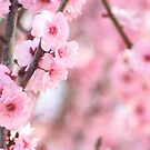 Pink Flowers by Sekans