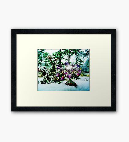 The Gem  Tree /  In Snow   Framed Print