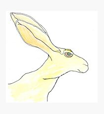 Jack Rabbit Photographic Print