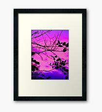 Holly tree sunset vibrant Framed Print