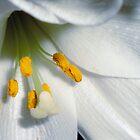 Lily White by karenkirkham