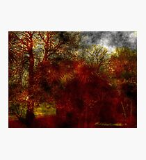 Tree's Abstract Photographic Print