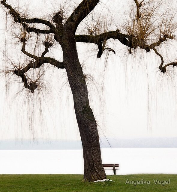 The Tree at the Lake Constance ... by Angelika  Vogel