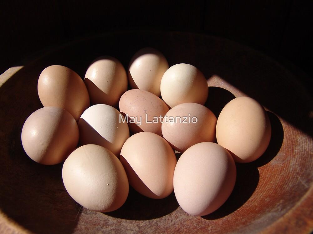 Fresh eggs by May Lattanzio