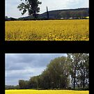 Yellow Sea – Diptych by hynek