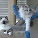 Just Hangin' out by Marjorie Wallace