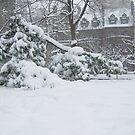 Snow Tree by Sarah McKoy