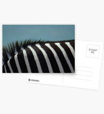 Deborah das Zebra Postkarten