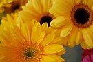 Three Yellow Daisies  by Tori Snow