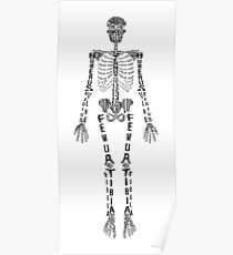 Póster Esqueleto tipográfico